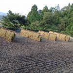 稲刈り完了!